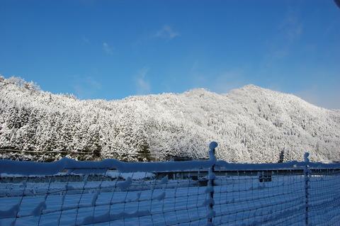 年始の雪 003