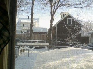 裏庭雪の裏庭
