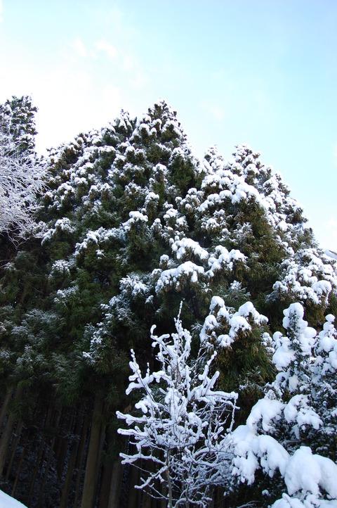 年始の雪 008