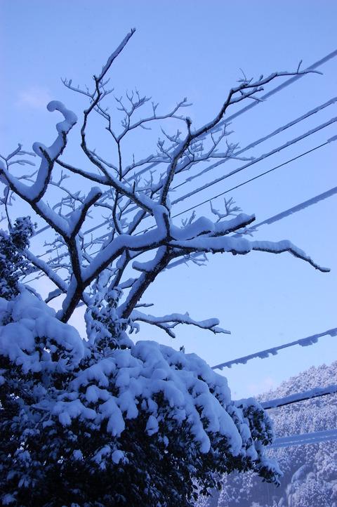 年始の雪 002