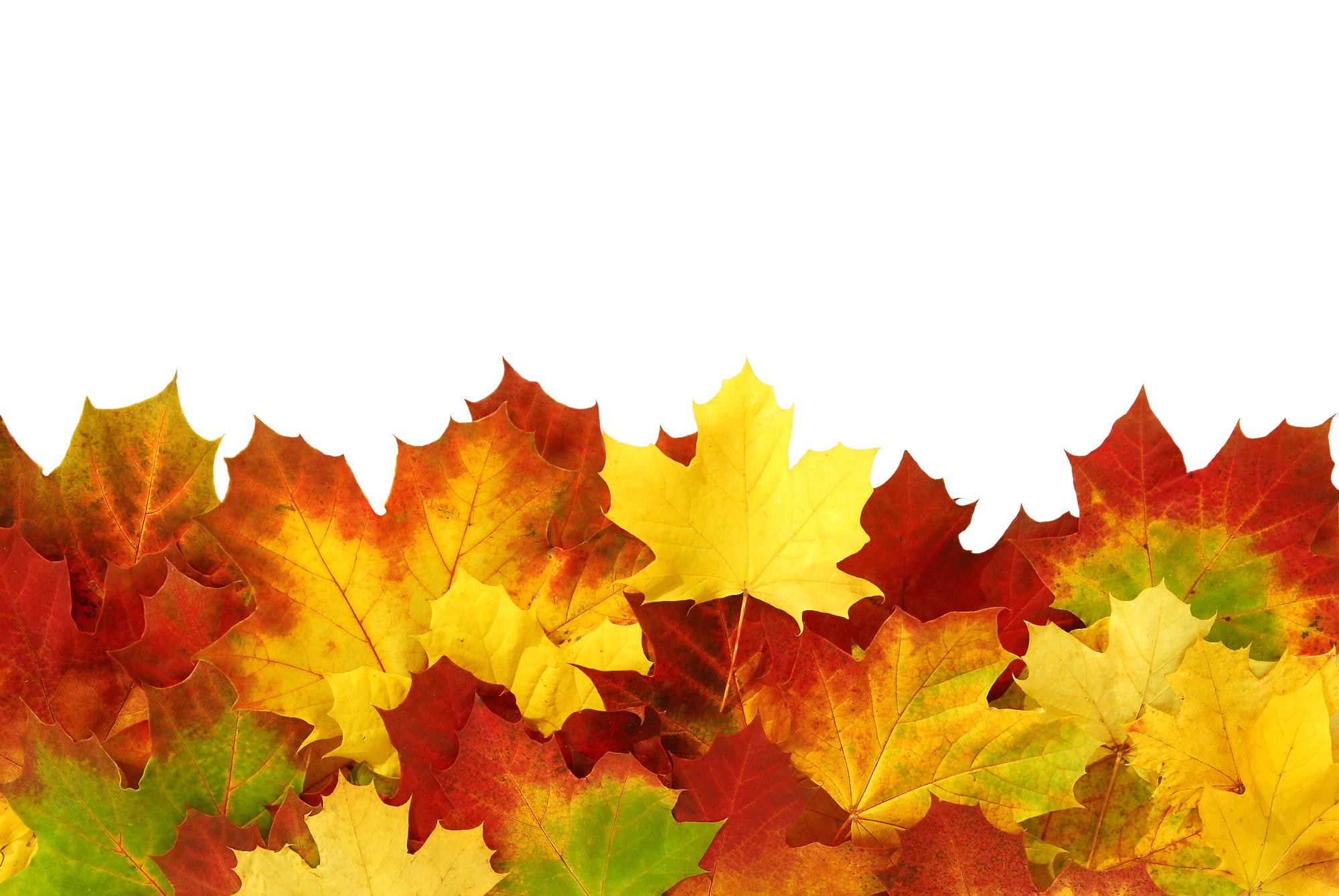 今年もそろそろ夏から秋へと季節の変わる時期になって来ました。秋というと、... カナダ・オタワで