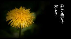 花は咲く5.