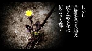 花は咲く8.