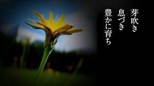 花は咲く4.