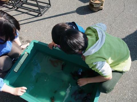 小瀬スポーツ公園移動水族館 022