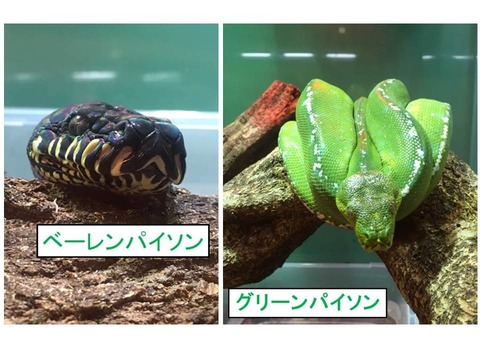 ヘビ ブログ写真