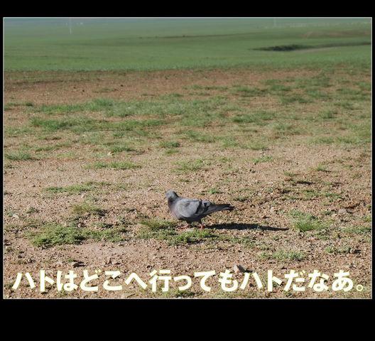 mongol_006_0012