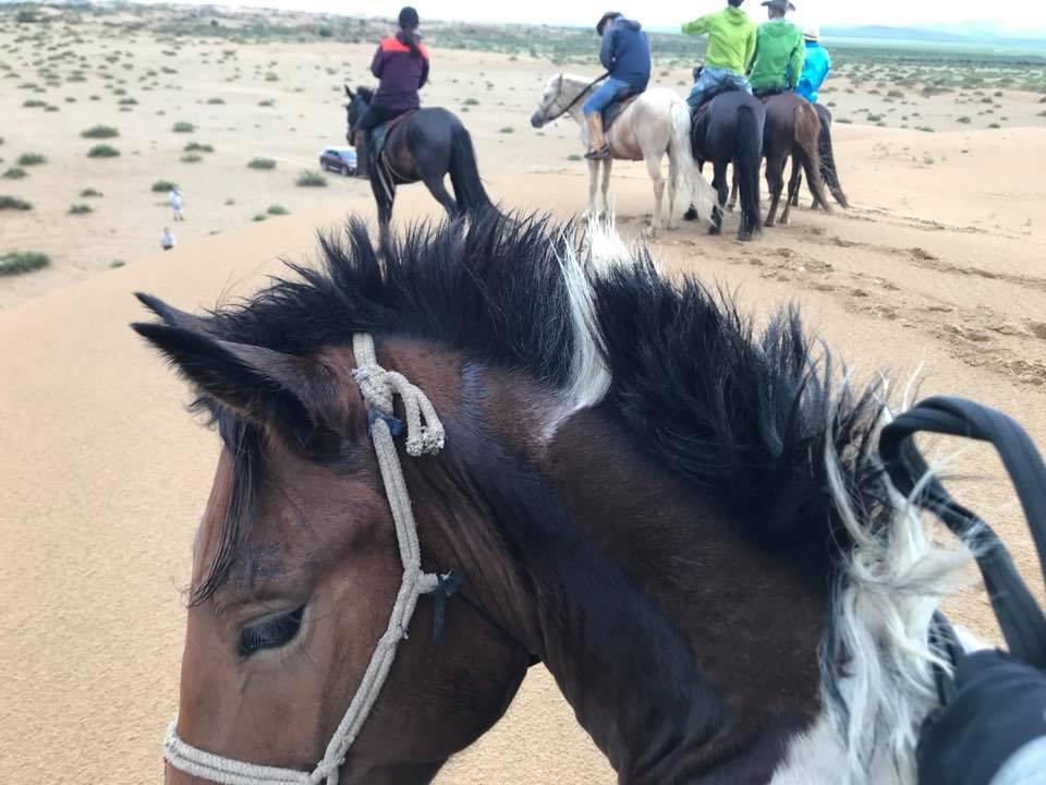 モンゴル 乗馬