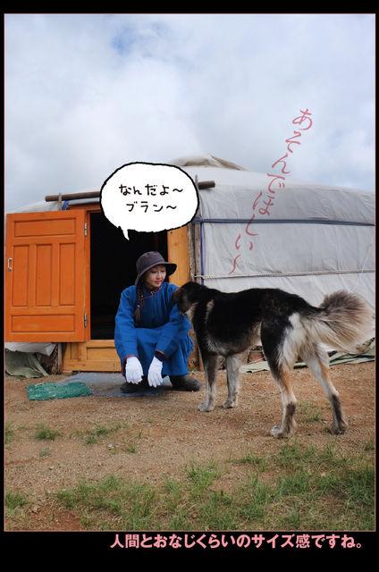 モンゴル_13030