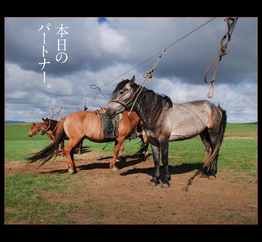 mongolia-08-003