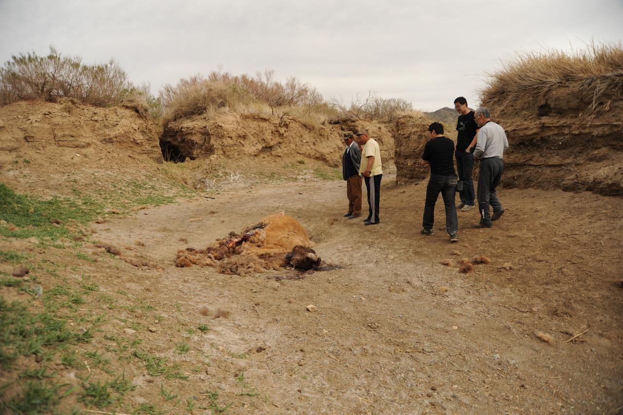 ハブトガイの死体