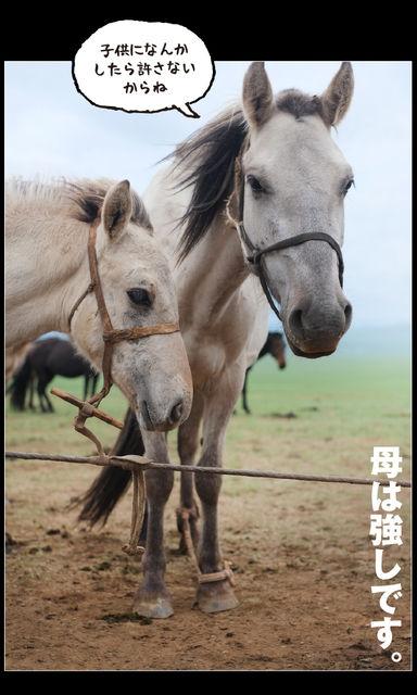 mongol_05_0034