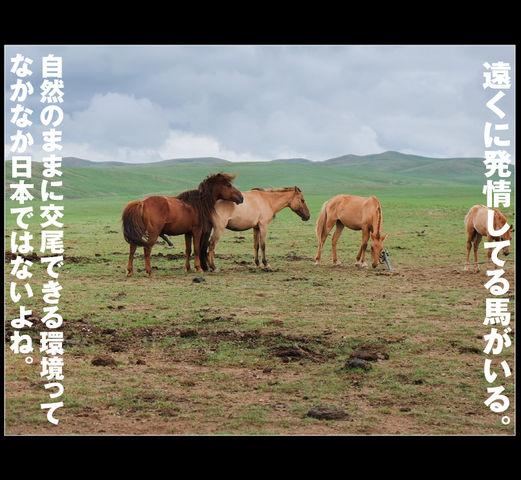 mongol_05_0026