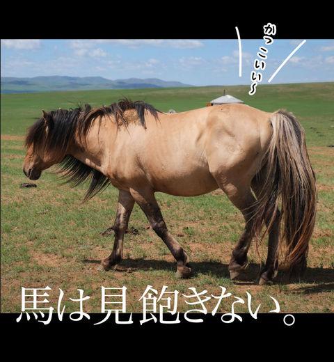 mongolia-08-036