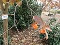 16PC115388マメガキ これも渋柿