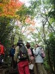 シラキの紅葉(2)