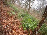 登山道林床(3)