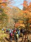 �峡谷の紅葉