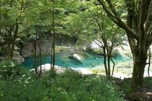 ・面河グリーン�
