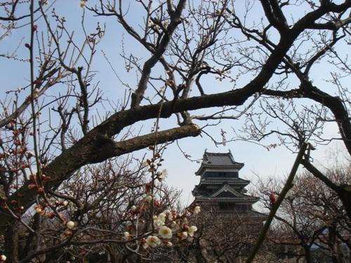 松本城と梅の花