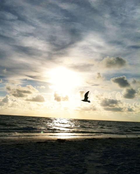 seagull sunset MGD©