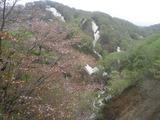 新緑と残雪