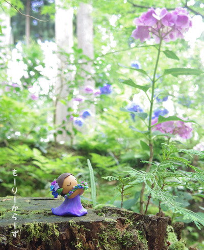 フラドール、紫陽花