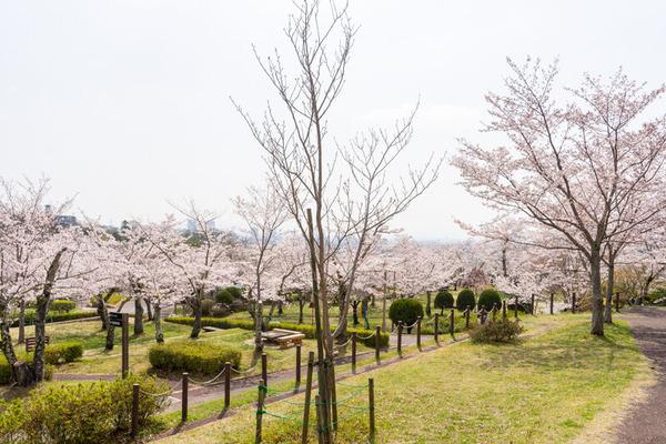 摂津峡公園桜1