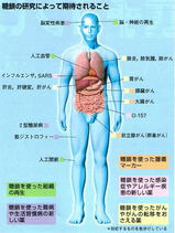 糖鎖の働き人体図