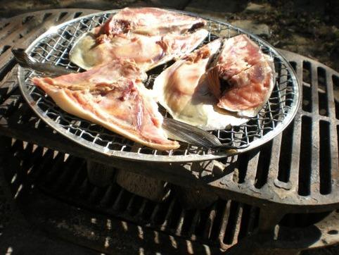 鮭頭焼き始め