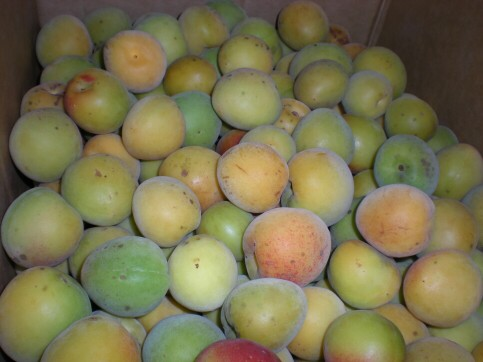 自然農法の完熟梅