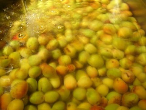 小梅を洗う