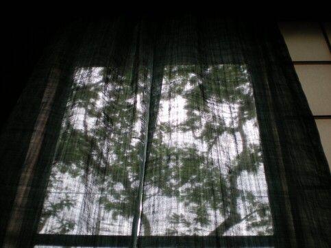 日よけの合歓の木