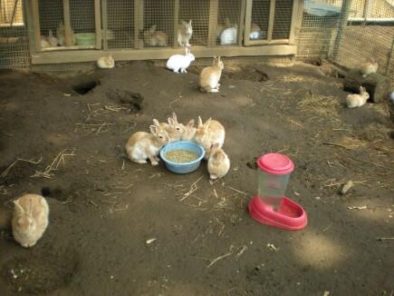 米屋のウサギ