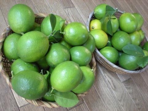 檸檬40個