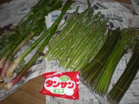山菜&アスパラ