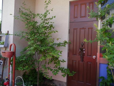玄関の木々