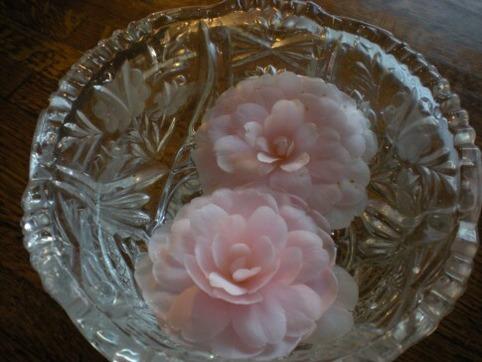食卓の山茶花