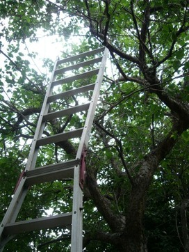 梯子をかけて・・
