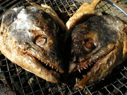 炭火の鮭頭