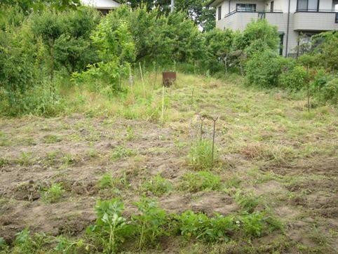 草取り後の里畑