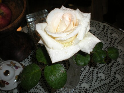 テーブルの白薔薇