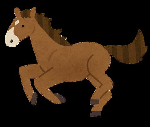 animal_horse_thoroughbred_brown