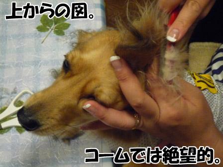 007_20120719000911.jpg