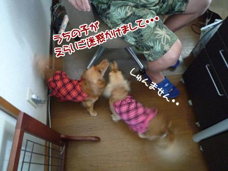 004_20120727235613.jpg