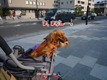 044_20120730010618.jpg