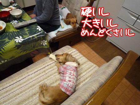 039_20110126224416.jpg
