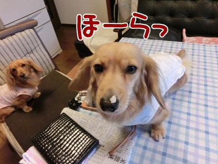 010_20121227004442.jpg