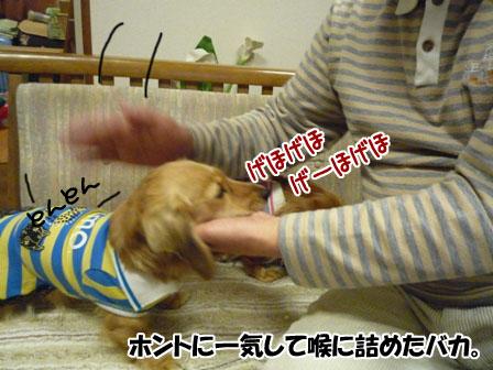 025_20111123232630.jpg