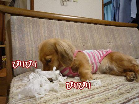 023_20110210011331.jpg